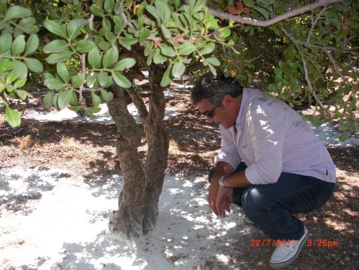 2011 07 23 σε μαστιχοδεντρο